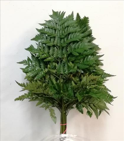 Verde LEATHER