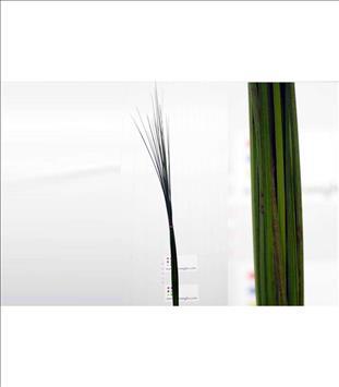 Verde STEEL-GRASS