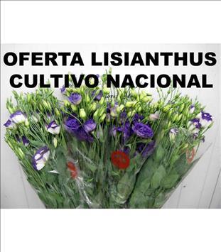 OFERTA LISIANTHUS VARIADO NAC. X4 PAQUETS